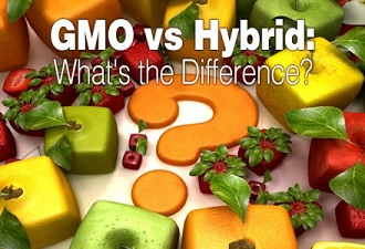GMOvs