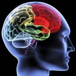 Blog brain