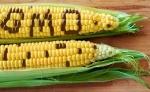 FD Blog, corn